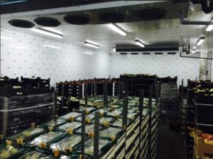 Агро опт гриб, ООО Оптовая компания в Самаре